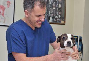 BoneVet Ορθοπαιδικός Κτηνίατρος